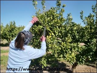 Cuando se podan los arboles frutales beautiful la poda de for Cuando se podan los arboles frutales