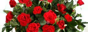 Como podar rosales